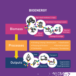 Bioenergy is the only renewable energy capable of providing heat, electricity, and transport fuels.